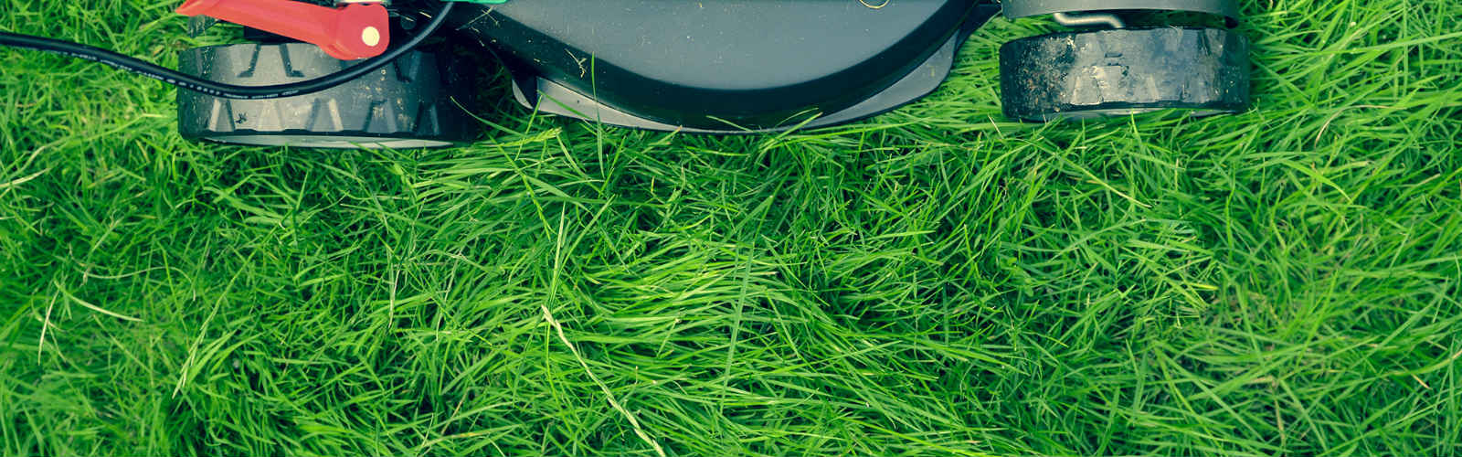 Alamo lawns mowing lawns for a healthier lawn this summer